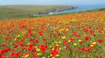 West Pentire, United Kingdom